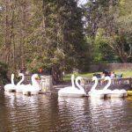 swanswestporthouse_sm.jpg