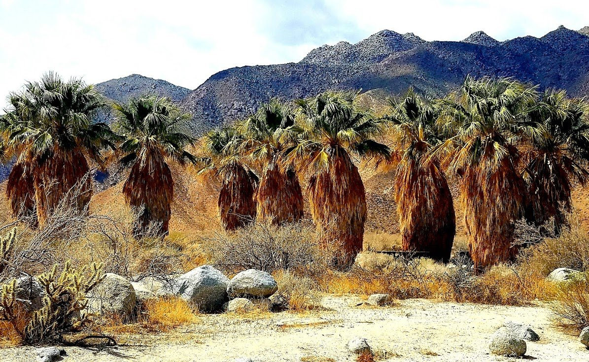 The oasis at Borrego Springs, in San Diego California