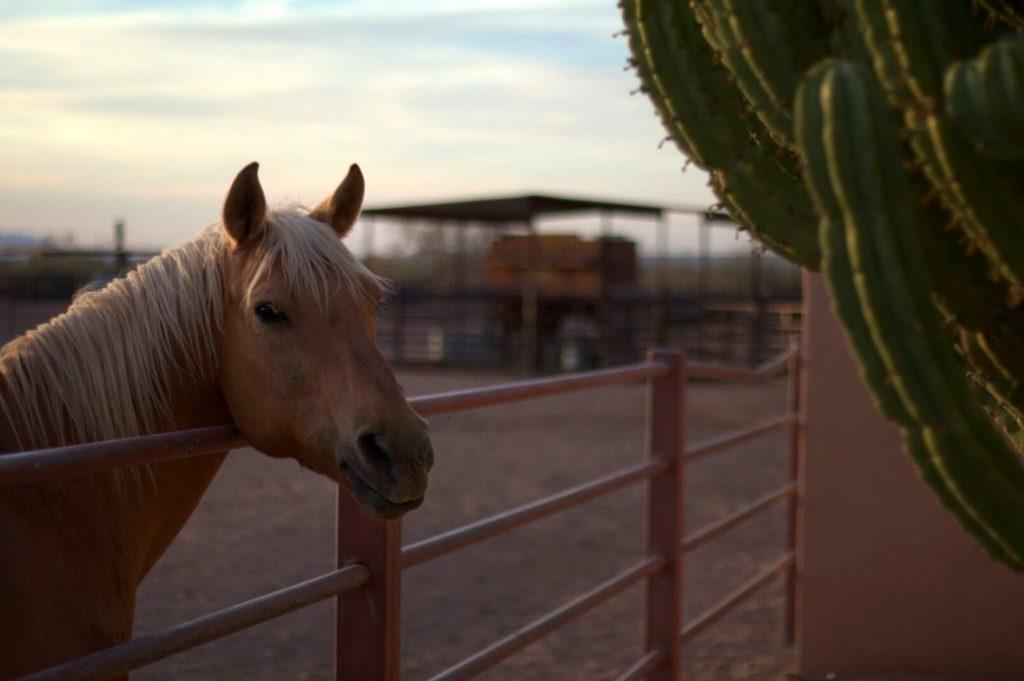 Desert horseback riding in Tucson Arizona