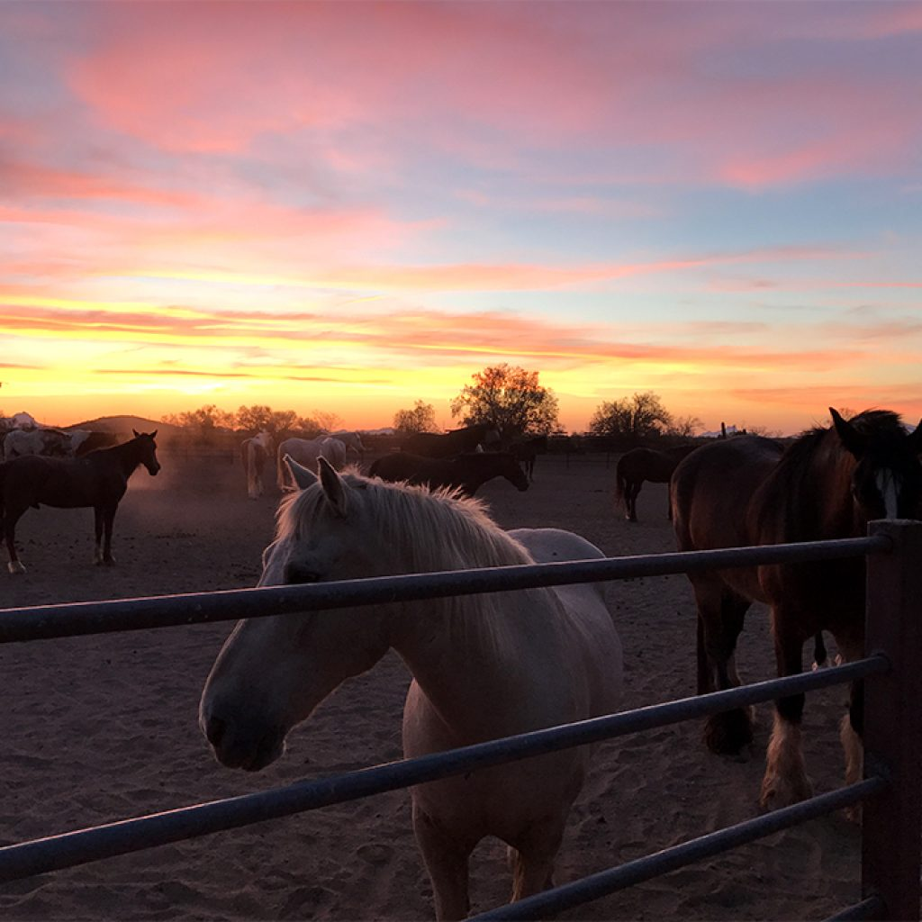 Sunset at the dude ranch - White Stallion Ranch all-inclusive resort in Tucson, Arizona