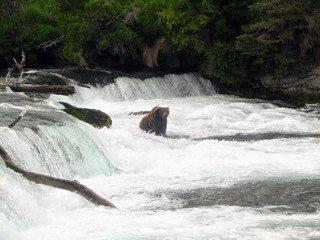 Best time to visit Alaska and Katmai National Park is in shoulder season