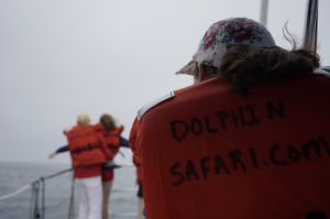 Captain Dave's Eco-Friendly Whale Watching Safari